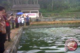 Bogor targetkan Ciseeng penghasil ikan hias terbanyak
