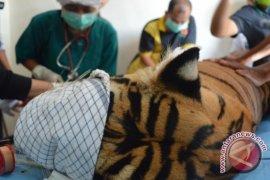 Dokter seperahu dengan harimau jadi perbincangan netizen