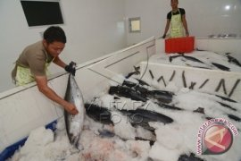 South Kalimantan mackerel export to Asia, Middle East