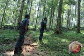 DPRD Rejang Lebong Kagumi Hutan Pelawan Namang