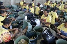 Perusahaan Pengolahan Mente Bantu Perekonomian Masyarakat Bali