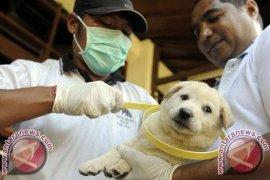 Vaksinasi Massal Bebaskan Bali Dari Rabies