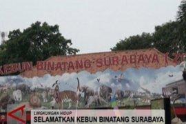 Satwa Kebun Binatang Surabaya terancam punah, ini penyebabnya