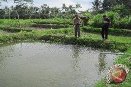 Petani Ikan Pangkalpinang Keluhkan Harga Pakan