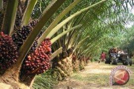 Peragi Siap Wujudkan Perkebunan Indonesia Berdaya Saing