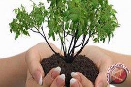 Bupati Bangka Larang Tebang Pohon Sembarangan
