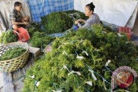 Karawang Akan Kembangkan Budidaya Rumput Laut