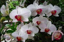 BFC Lestarikan Bunga Anggrek Asli Bangka