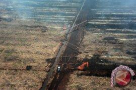 Puluhan Hektare Lahan Di Kotabaru Kalsel Terbakar