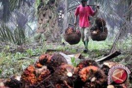 DPRD Bangka Tengah sikapi keluhan petani sawit
