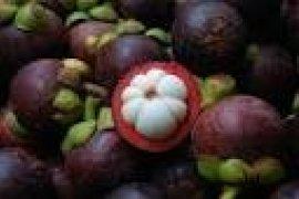Banten Andalkan Lebak Dan Pandeglang Penghasil Manggis
