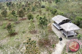 BNPB siapkan 10.000 bibit pohon laban