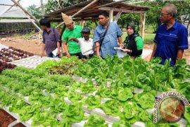 Pelatihan Sistem Pertanian Hidroponik