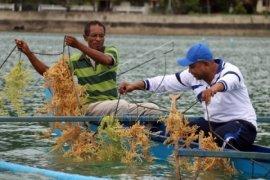 Kesultanan Ternate promosikan potensi ekspor Maluku Utara
