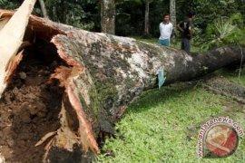 Empat warga meninggal tertimpa pohon saat hujan deras