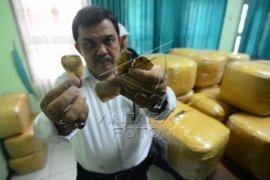BKSDA gagalkan penyelundupan 263,78 kg sisik trenggiling