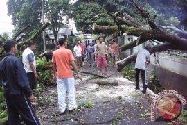 Warga Mukomuko nyaris tewas tertimpa pohon tumbang