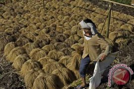 Bupati Eka imbau jaga ketahanan pangan di Tabanan