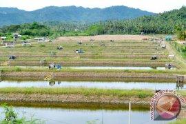 BUMN Hadir Untuk Negeri Bagi Bumi Udang Bratasena