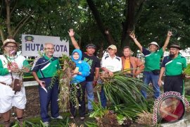 Meratus Orchids Planted in Banjarmasin