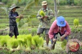 OJK Bali dorong sektor penerima KUR merata