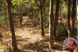 Malaysia Tertarik Investasi Gaharu di Belitung Timur