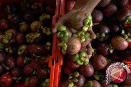 Kementan lepas ekspor 93 ton manggis  ke China