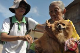 Kalbar-Sarawak menggelar vaksinasi massal rabies di perbatasan Entikong