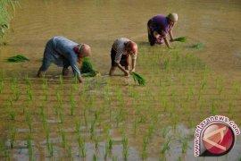 Bangka Barat Salurkan Bantuan Alat Pertanian
