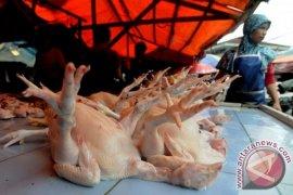 Harga ayam potong di Jambi Rp50 ribu