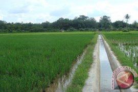 40 Persen Irigasi Kabupaten Bogor Butuh Perbaikan