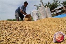 Nilai tukar petani Jambi naik 1,68 persen