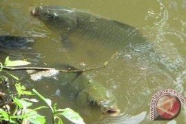 Kolam pembibitan ikan BBI Belumai tidak berfungsi