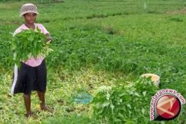 Nilai tukar petani Jambi naik 0,04 persen