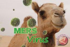 Jenis virus corona baru sebabkan ratusan unta mati