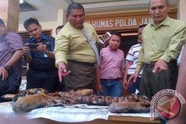 Polisi periksa BKSDA kasus perdagangan kulit harimau