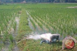 Sawah Kesulitan Air, Petani Silakan Lapor