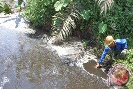 Padi Petani Ensalang Sekadau Diduga Mandul Gara-gara Limbah CPO