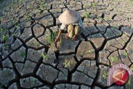 200 hektare lahan pertanian di Penajam kekeringan