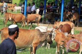 Pemkab Aceh Utara diminta bangun pasar hewan