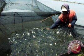 Bupati Bangka Tengah: Ikan Jadi Usaha Pokok