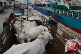 Berikan Bulog-Kementan tugas penyediaan sapi potong
