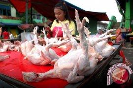Stok daging ayam ras untuk Lebaran surplus