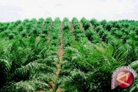 WARSI: moratorium perkebunan sawit momentum perbaikan ekologi