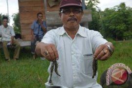 Petani Tambak Udang Butuh Pendampingan Pemerintah