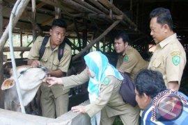 Pemkot Padangsidimpuan Periksa Hewan Kurban