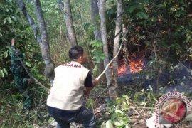 Hutan Di Desa Bojongkembar Sukabumi Terbakar