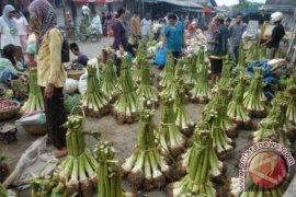 Pemprov Banten siapkan strategi peningkatan ekspor talas 'beneng' khas Pandeglang