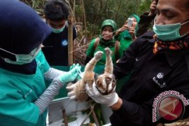 Warga serahkan kukang Jawa ke PMI Sukabumi