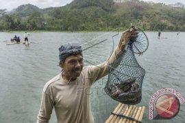 Akibat Kemarau, Produksi Ikan di Jabar Menurun